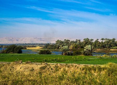 nile: sugarcane plantation in Egypt