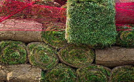 grassplot: rolls of lawn grass Stock Photo