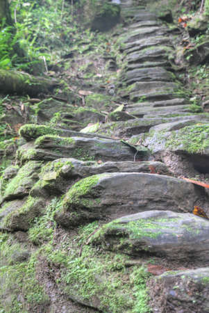 archeological: Stone stairs built by the Tayrona indigenous anmericans around 800AD  They lead to Ciudad Perdida  Lost City  archeological site in today s Tayrona National Park in Colombia  1200 such stairs lead up to Ciudad Perdida