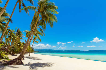 Beautiful landscape of tropical beach on Boracay island, Philippines. Coconut palm trees, sea, sailboat and white sand. Nature view. Summer vacation concept. Foto de archivo