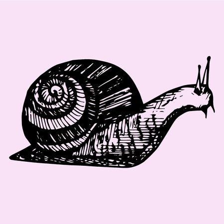 snail, hand drawn, doodle style, sketch illustration