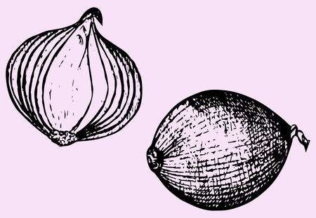 unpeeled: bulb onion, doodle style, hand drawn