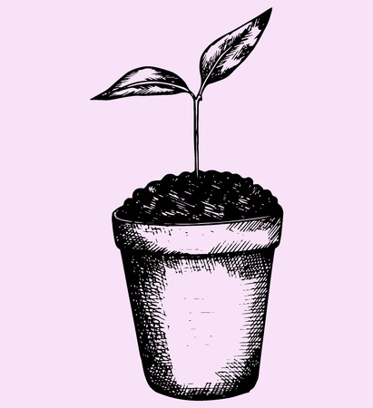 plant pot: young plant in pot, doodle style, hand drawn