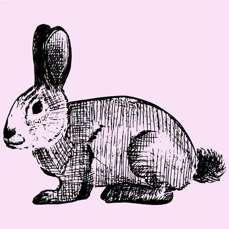 cottontail: cottontail, rabbit, doodle style, sketch illustration Illustration