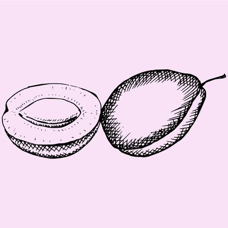 plums, doodle style, sketch illustration