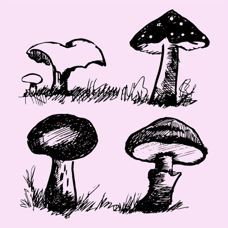plantae: set of mushrooms, edible and inedible, doodle style, sketch illustration Illustration