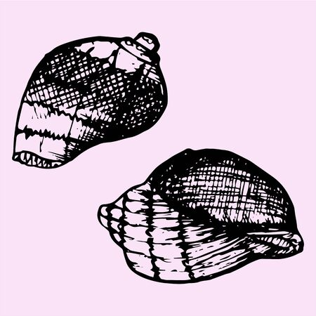 cockle: set of sea shell, doodle style, sketch illustration
