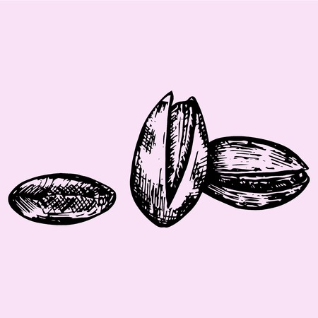 draw a sketch: Pistachios, set, doodle style, sketch illustration, hand drawn, vector
