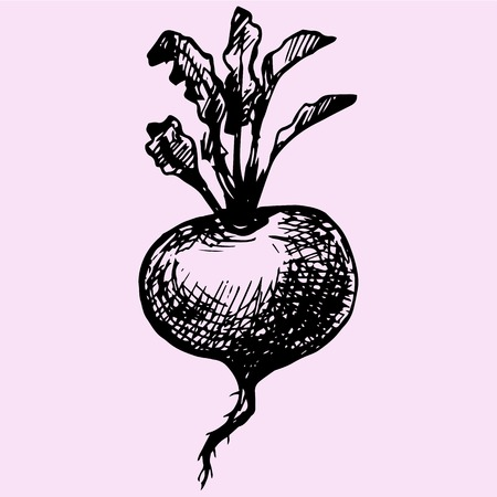 turnip: turnip with leaves doodle style sketch illustration hand drawn vector Illustration