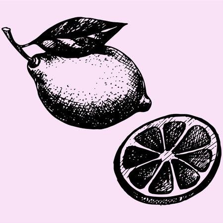 lemon with leaf, slice of lemon doodle style sketch illustration hand drawn vector