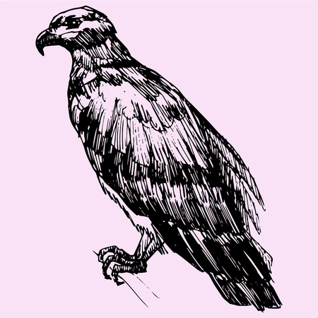swoop: eagle, doodle style sketch illustration hand drawn vector