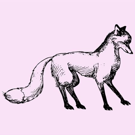 fox, doodle style sketch illustration hand drawn vector Illustration