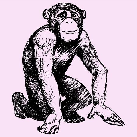 monkey, Sitting chimpanzee looks, doodle style sketch illustration hand drawn vector