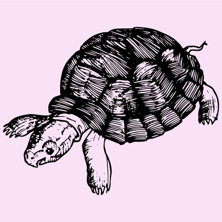 turtle doodle style sketch illustration hand drawn vector