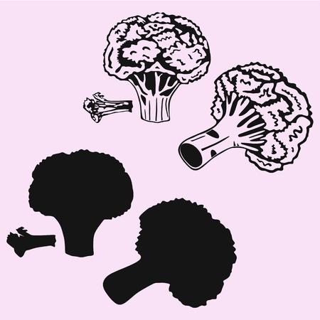 Broccoli vector silhouette isolated illustration.