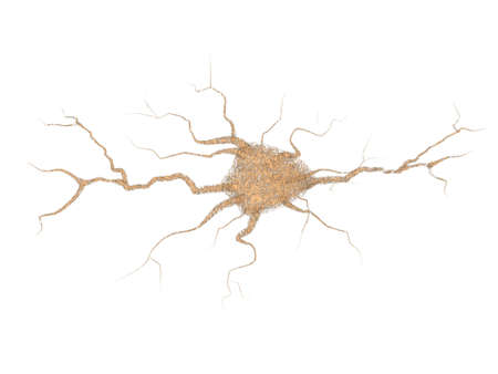 neurone: separate nervous cage
