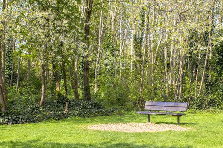 Footpath in a flowered park. Green and flowering trees. Bright gozon. Bench in the park and flowering trees around.