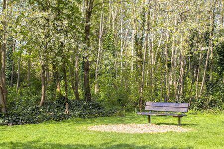 Sentier dans un parc fleuri. Arbres verts et fleuris. Gozon lumineux. Banc dans le parc et arbres fleuris alentour.