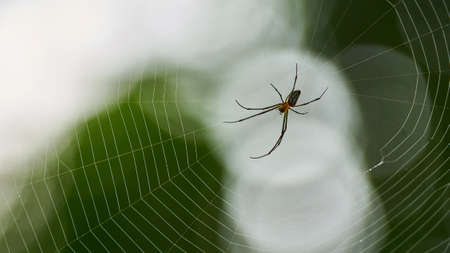 Small spider sits on a big cobweb