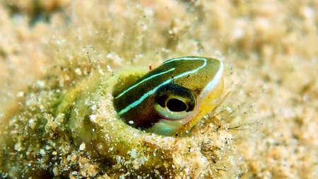 Small cute fish in Red sea, Eilat, Israel.