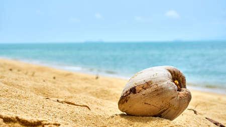 Coconut on the beach of Koh Samui. Thailand.