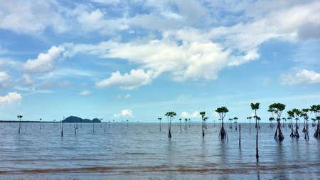 Sea view and mangrove on Koh Pangan. Thailand