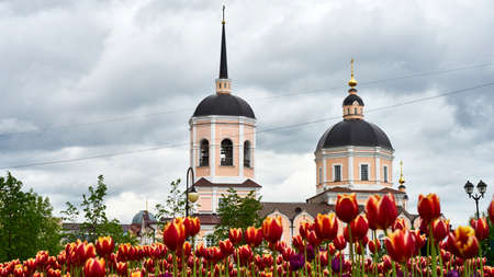 siberia: Beautiful purple tulips on church background. Tomsk. Russia.