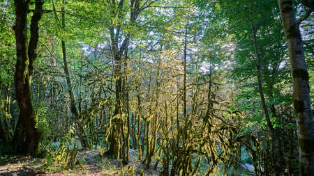 Moss in forest. Sunlight in the branches of trees. Sochi