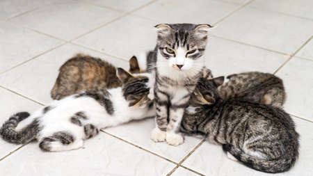 Mother cat feeds four colorful kittens, Sochi 2020 Stock fotó