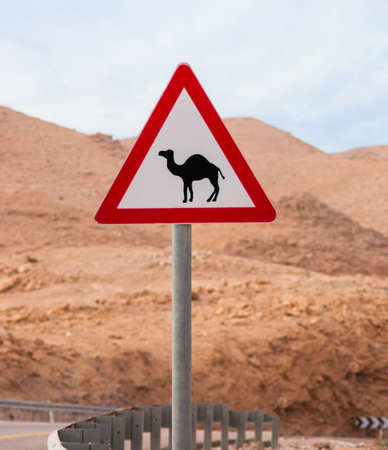 Triangular road sign with warning for crossing camels Stockfoto