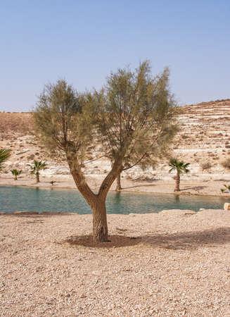 Oasis in the Desert Stock Photo - 13383596