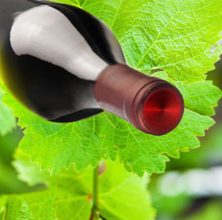 Wine composition  vine leaves and a bottle of wine Stock Photo