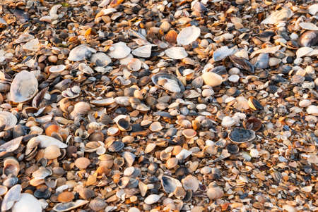 A background made of seashells at sunset photo