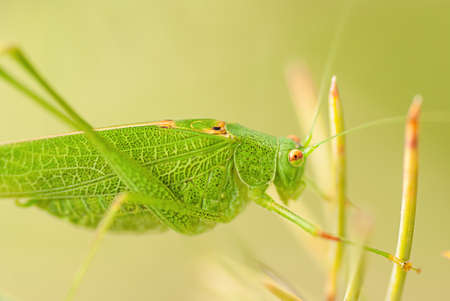 Grasshopper is a list of the grass Stock Photo - 14870623