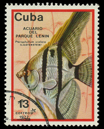 CUBA - CIRCA 1977  A stamp printed in Cuba shows fish Pterophyllum scalare , circa 1977 Stock Photo - 17950398