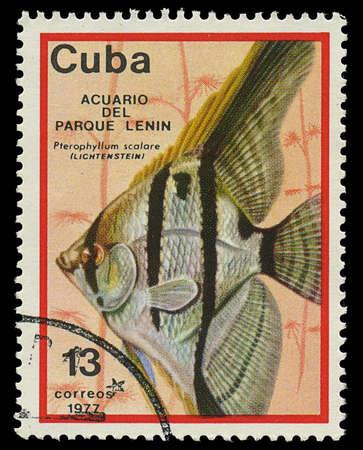 CUBA - CIRCA 1977  A stamp printed in Cuba shows fish Pterophyllum scalare , circa 1977 Stock Photo - 17950398