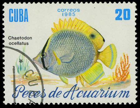 ocellatus: CUBA-CIRCA 1985  A stamp printed in Cuba shows fish Chaetodon ocellatus, circa 1985