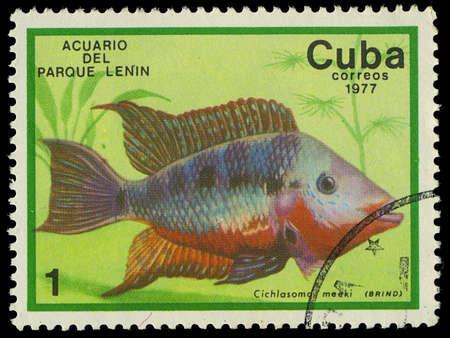 cichlasoma: CUBA-CIRCA 1977  A stamp printed in Cuba shows fish Cichlasoma meeki, circa 1977 Editorial