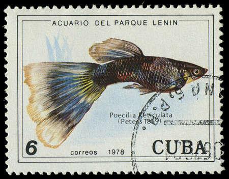CUBA-CIRCA 1978  A stamp printed in Cuba shows fish Poecilia Reticulata, circa 1978 Editorial