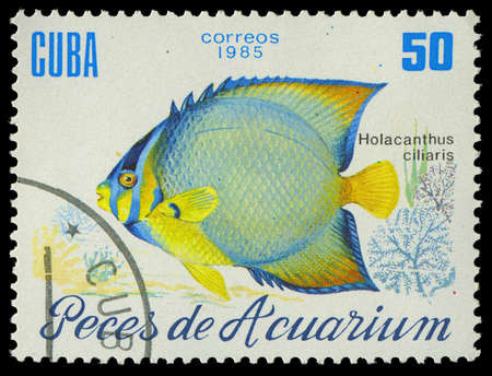 CUBA-CIRCA 1985  A stamp printed in Cuba shows fish Holacanthus ciliaris, circa 1985 Stock Photo - 17950379