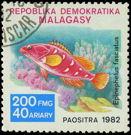 epinephelus: MALAGASY - CIRCA 1982 Stamp shows image of a Epinephelus fasciatus, circa 1982