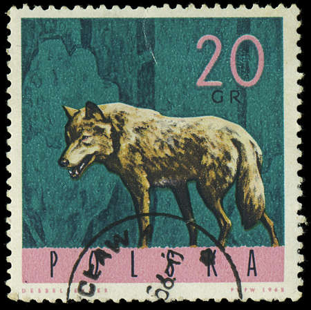 estampilla: POLAND - CIRCA 1965  A stamp printed in Poland from the  Forest Animals  issue shows a wolf, circa 1965  Editorial