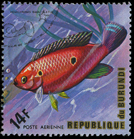 postmail: Republic of Burundi, - CIRCA 1975  A stamp printed by Burundi shows the fish Hemichromis bimaculatus, circa 1975