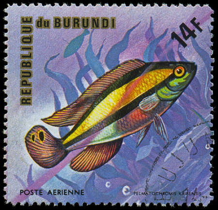 Republic of Burundi, - CIRCA 1975  A stamp printed by Burundi shows the fish Pelmatochromis kribensis, circa 1975 Editorial