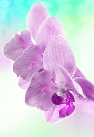 orchids on light background  Toned image  photo