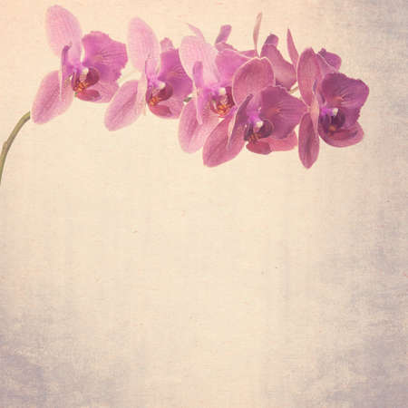 textured old paper background with  magenta phalaenopsis orchid photo