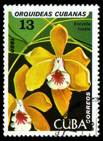 CUBA - CIRCA 1980: a stamp printed in the Cuba shows Brown Veined Encyclia, Encyclia Fucata, Orchid, circa 1980 Stock Photo - 21417536