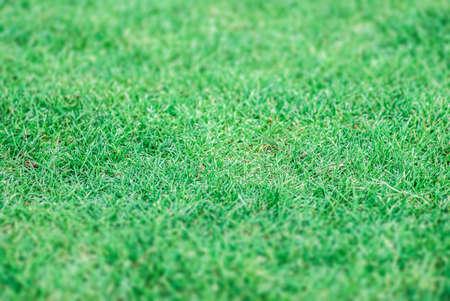 Green grass background texture. photo