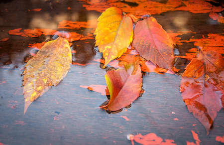 Fallen yellow leaves on the water to board in autumn photo