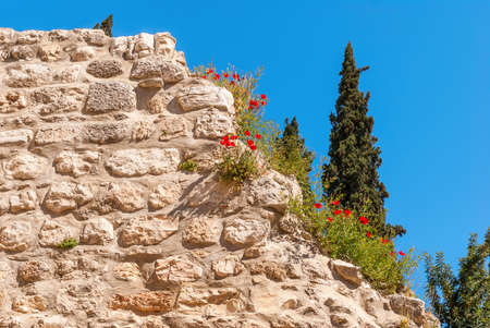 Poppies on Ruins Temple of Serapis in Jerusalem